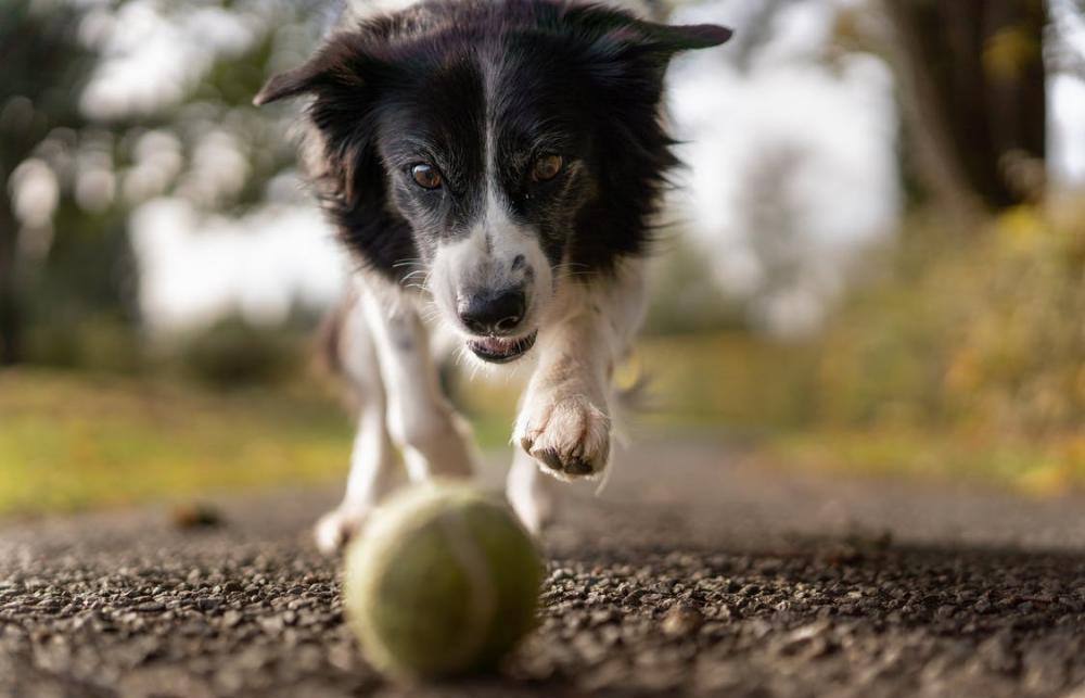 Площадки для выгула собак: нормы и правила